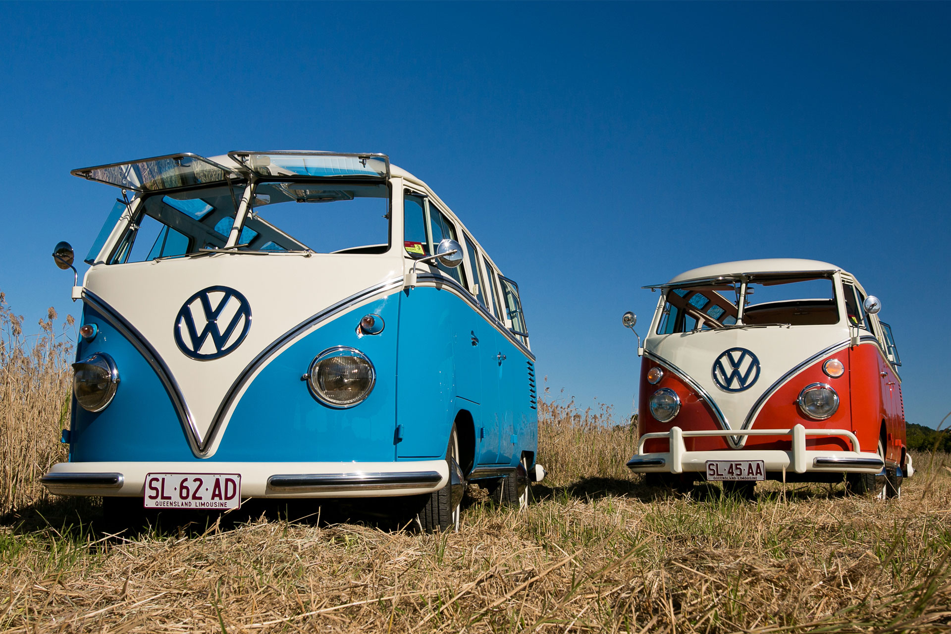 Two split-screen Kombi microbuses in Sunshine Coast cane field.